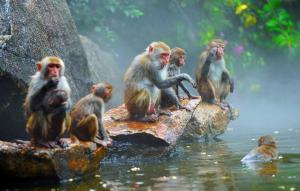 Туры в Санья - остров обезьян